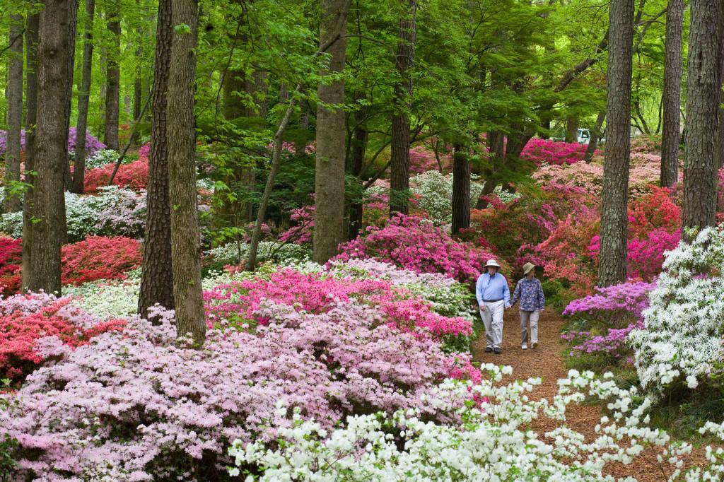 Overlook Garden 101