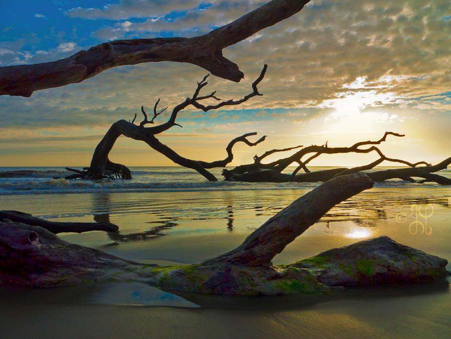 driftwood_beach_jekyll_island2