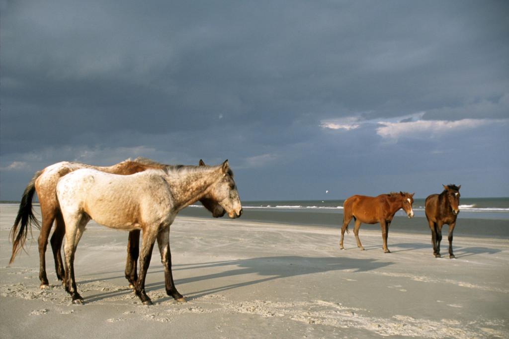 tgalley-greyfieldferal-horses