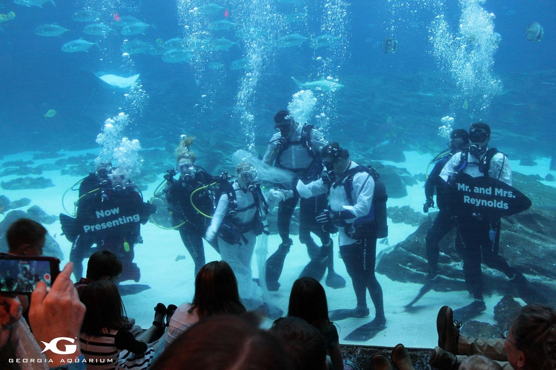 Georgia aquarium hosts first underwater wedding gafollowers for Plenty of fish atlanta ga