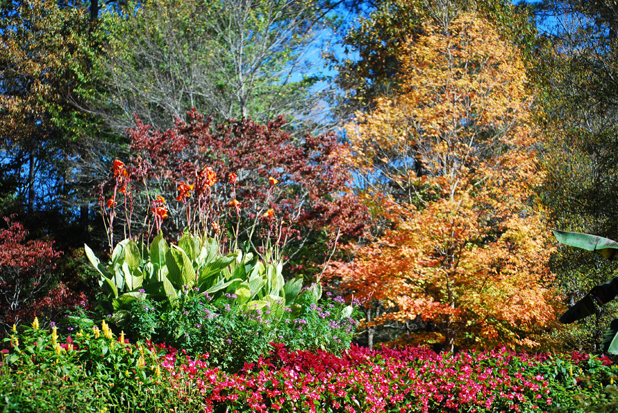 Autumn at Gibbs Gardens