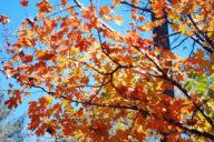 Gibbs Gardens in Fall