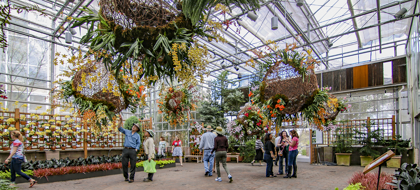 The orchid daze exhibit at atlanta 39 s botanical garden 39 s is a must see gafollowers for Atlanta botanical garden upcoming events